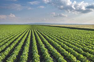 Moderne Landwirtschaft ist nachhaltig © fotokostic/ iStock/ Thinkstock