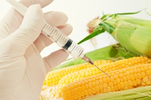 Monsanto Bauer GVO GMO Mais