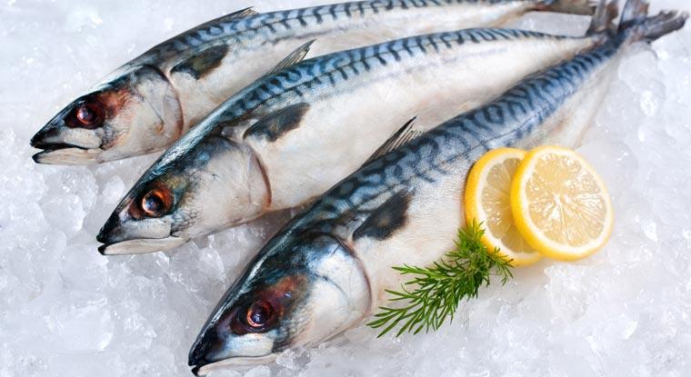 Seit Jahren kämpfen die betroffenen Länder der Fischereien im Nordatlantik den ?Makrelenkrieg?: