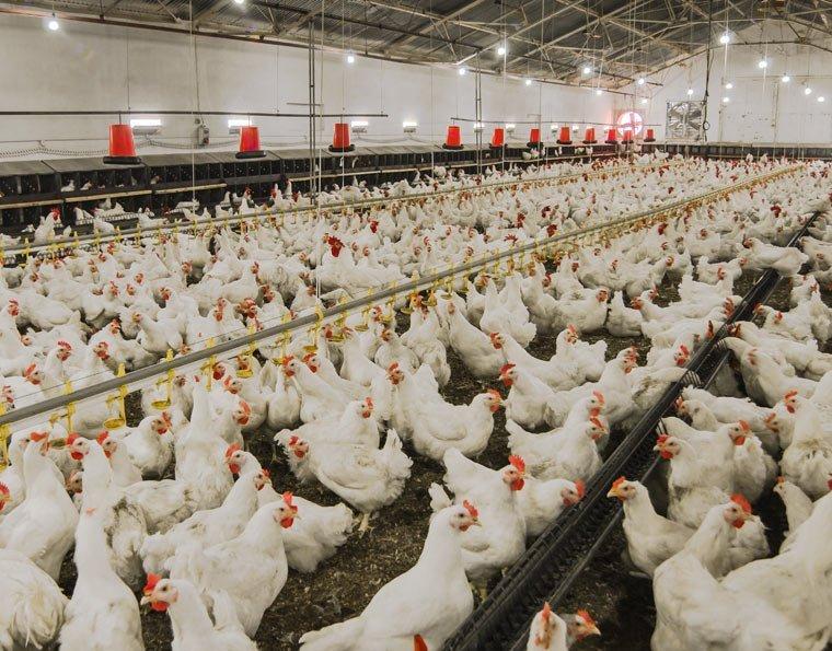 Nehmen auch Sie Einfluss auf die Zukunft der Tierhaltung