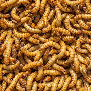 Kleine Insekten retten die Umwelt