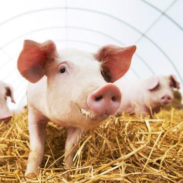 Erklärung für mehr Tierschutz