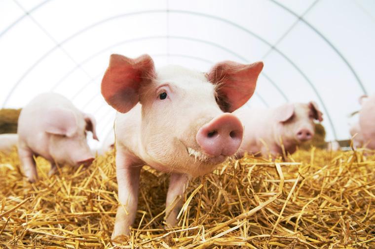 Mehr Tierschutz für Tierhaltung