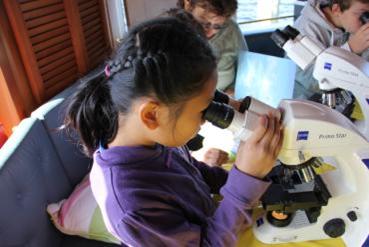 Mit dem Mikroskop können die Kinder selbst kleinste Lebewesen erkennen