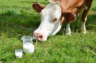 Deutsche Milchbauern kämpfen ums Überleben