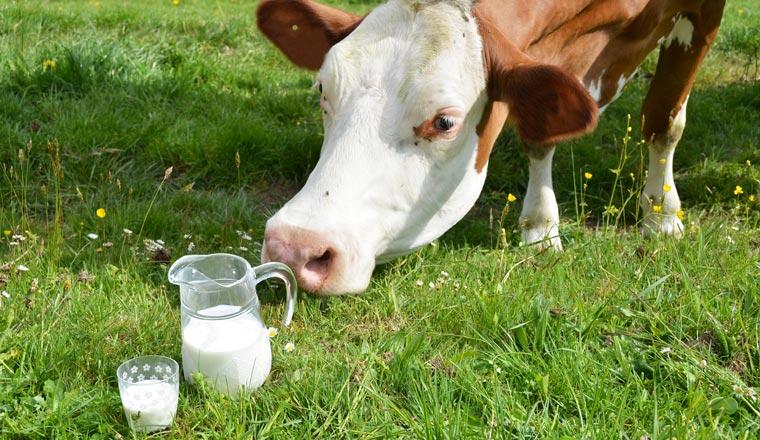 Globaler Kampf um den Milchpreis