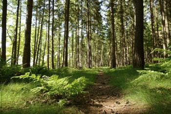 Naturnaher Wald bei Deutschen beliebt
