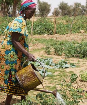 Die richtige Anbauweise kann gegen Hunger helfen