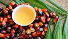 Rapunzel erneut unter den Spitzenreitern bei Bio-Palmöl