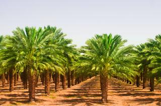 Palmöl weiterhin Brennpunkt beim Thema Nachhaltigkeit