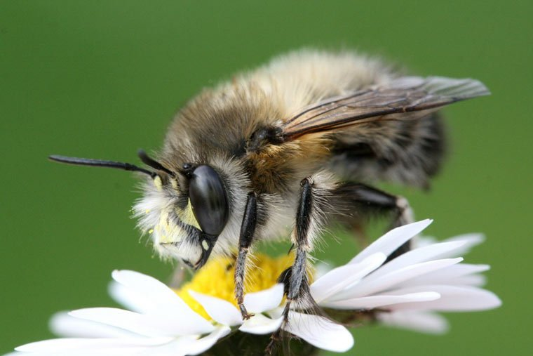 Pflanzwettbewerb für Bienen erfolgreich abgeschlossen