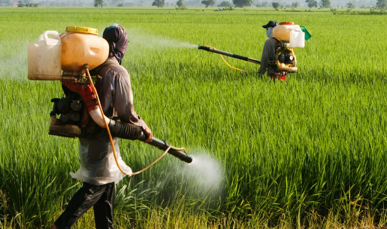 Schwere Gesundheitsschäden durch Pestizidbelastung