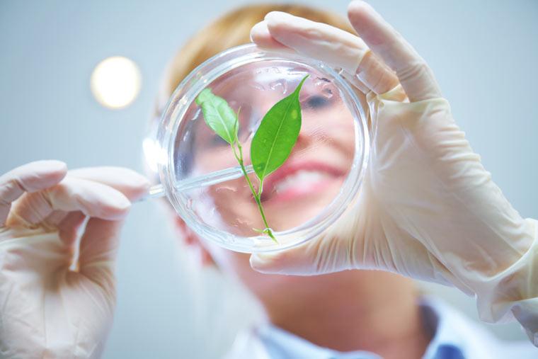 Neue Methoden in der Pflanzenzucht