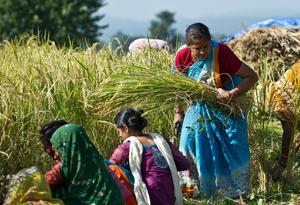 Reis Fairtrade