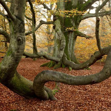 Reinhardswald wird Hessens neuer Naturpark