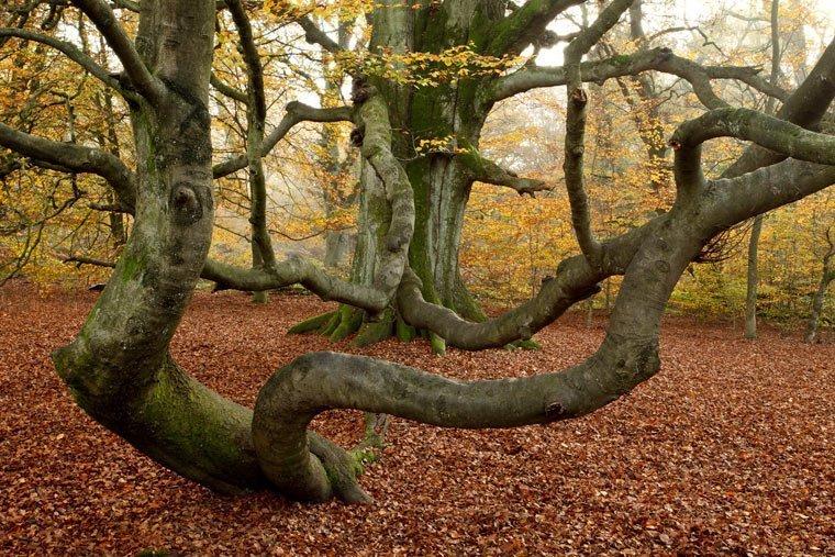 Reinhardswald Hessens neuer Naturpark