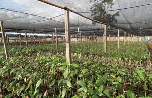 ritter sport nachhaltiger anbau von kakao in nicaragua. Black Bedroom Furniture Sets. Home Design Ideas