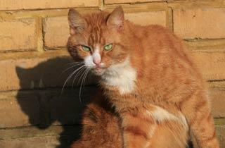 Tierheime beklagen Katzenschwemme im Mai