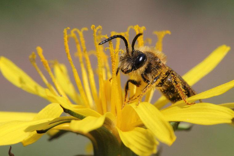 Wir tun was für Bienen - Deutschland summt