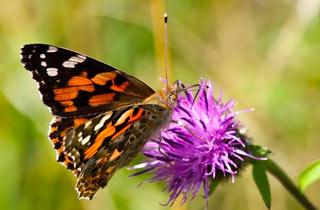 Rettungsaktion für gefährdete Wildpflanzen