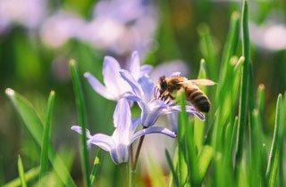 Kampagne für den Schutz und Erhalt von Bienen