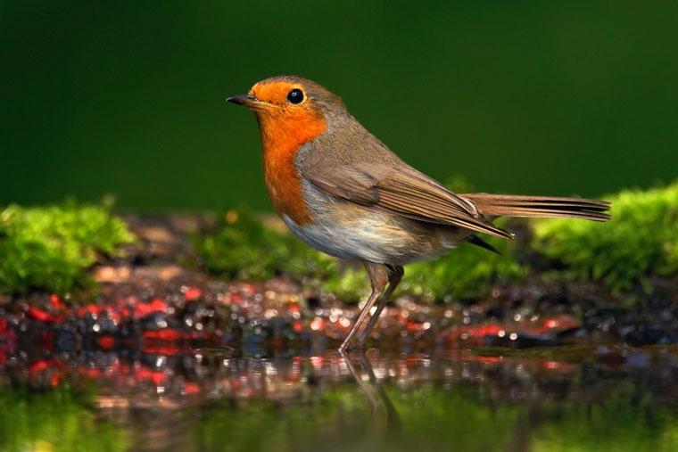 Die Sprache der Vögel verstehen lernen