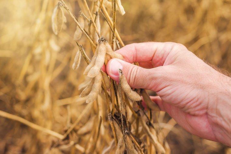 Anbau von Eiweißpflanzen soll gestärkt werden
