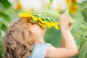 Sonnenblumen im Sommer © yaruta/iStock/Thinkstock