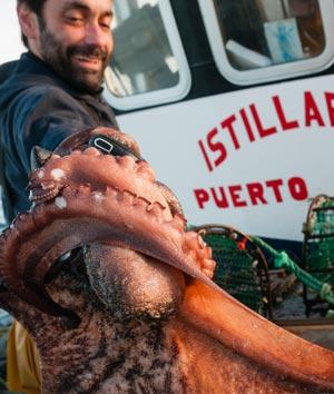 Der Oktopus ist ein wichtiger Bestandteil des Ökosystems und Lebensraums Mittelmeer