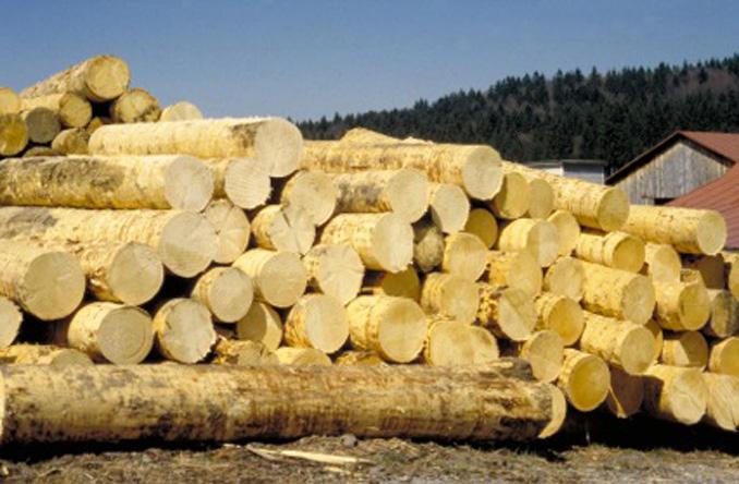 Run aufs Holz