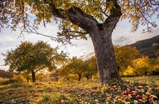 25 Jahre Obst- und Gartenbauverein Strinz-Margarethä