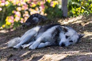 Tierquälerei Hunde prwstd