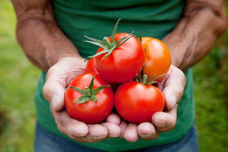 Gegen ein Patent fuer Tomaten