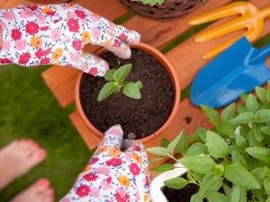 Wer beim Gärtnern auf torffreie Blumenerde setzt, schützt die Moore. ©NinaMalyna (iStock/Thinkstock)