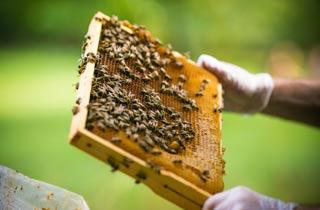 Imker werden mit Urban Beekeeping