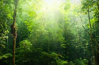 Nahrung für deutsche Nutztiere zerstört Urwald