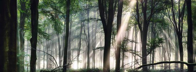 Urwald in Russland von Ieka abgeholzt