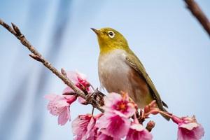 Vogel NABU Vegetationsperiode