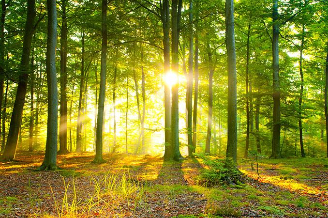Der Klimawandel verändert unsere Natur