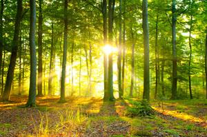 Knapp 1 Million Hektar der deutschen Waldfläche ist FSC-zertifiziert © kwasny221/ iSTock/ Thinkstock
