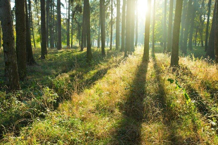 Wälder schützen Aufgaben des Waldes