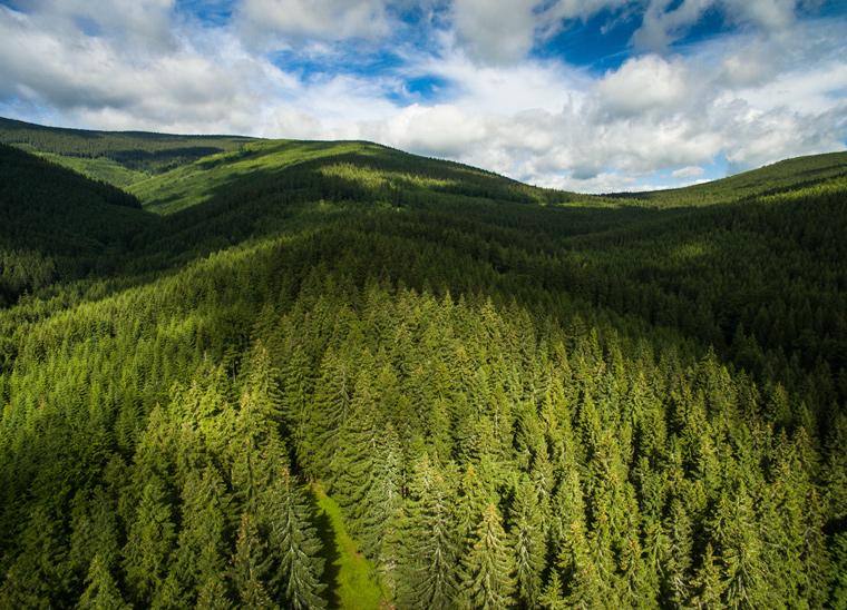 Schutz der Wälder reicht nicht aus