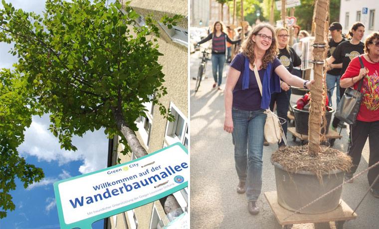 München: Umzug der Wanderbaumallee