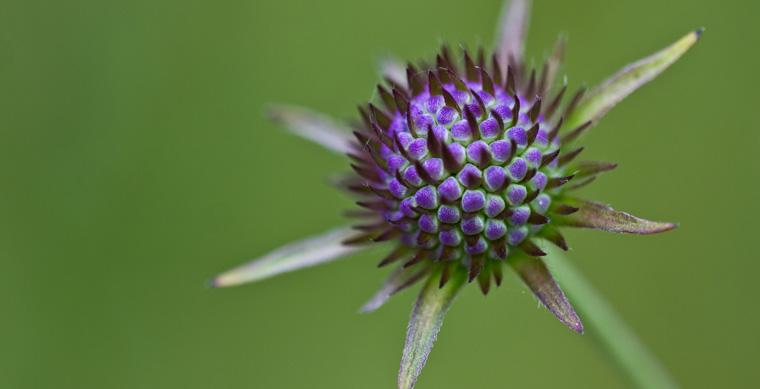 Die Loki Schmidt Stiftung rettet seit Jahren bedrohte Pflanzenarten