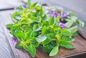 Leckere Wildpflanzen verfeinern Gerichte. © tycoon751/iStock/Thinkstock
