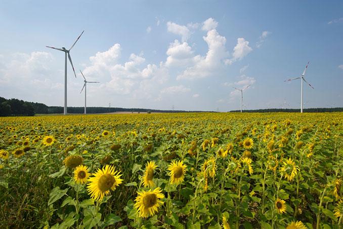 Windpark in Buchhain