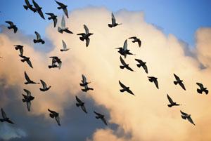 Zugvögel sind früher zurück als gedacht