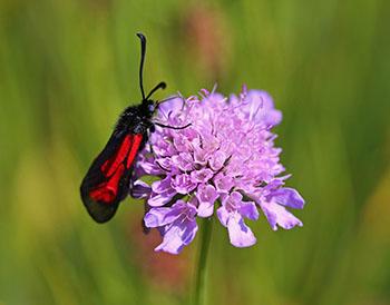 Studie der TUM: Ökologischer Landanbau fördert die Artenvielfalt © Angelika Koch-Schmid_pixelio.de