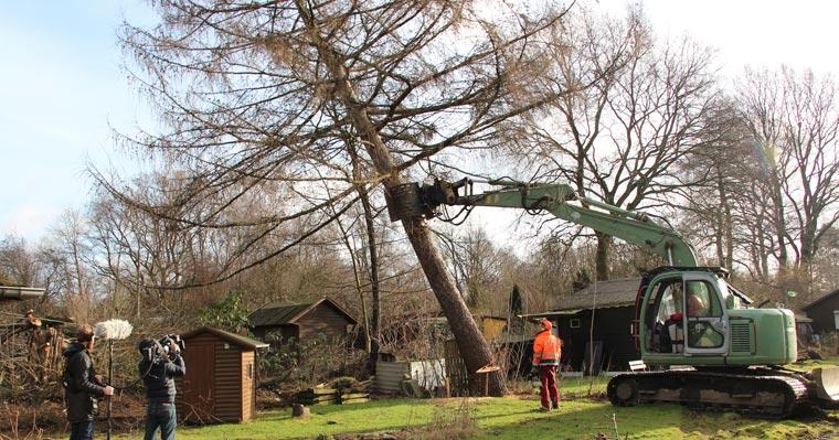 Baumschutzverordnungen unwirksam