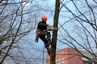 Baudruck gegen Baumschutz